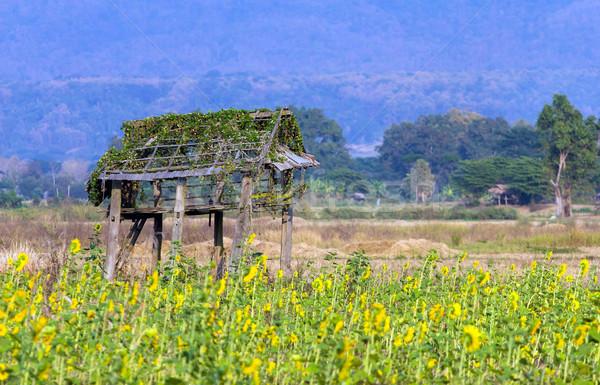 Ruïneren hut zonnebloem berg bloem hout Stockfoto © supersaiyan3