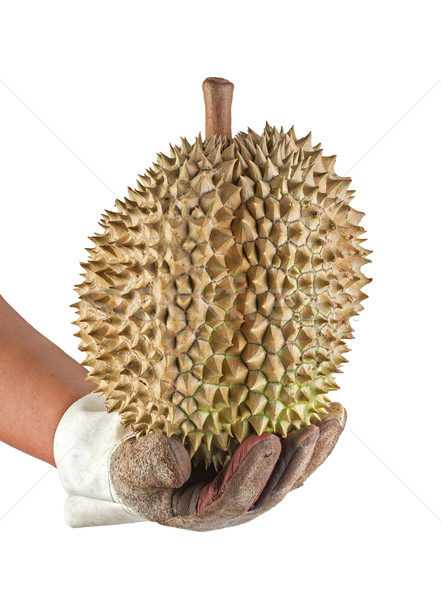 brown Durian holding with leather glove isolated on white Stock photo © supersaiyan3