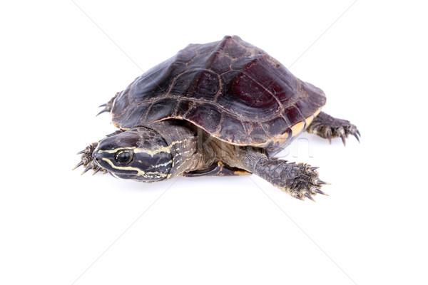 Schildpad witte voedsel natuur voeten dier Stockfoto © supersaiyan3