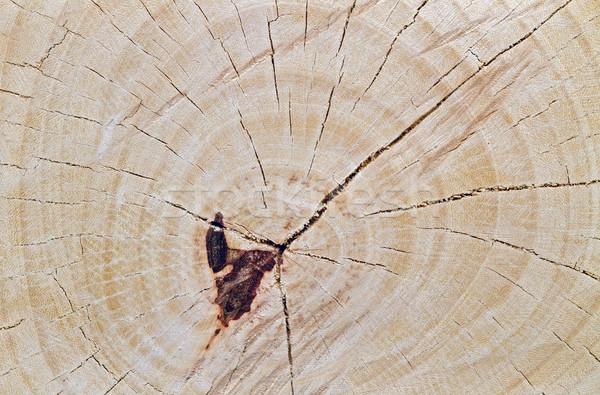 Keresztmetszet fa mintázott közelkép fa természet Stock fotó © supersaiyan3