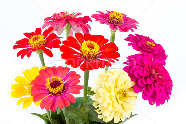 Kleurrijk levendig bloem voorjaar abstract schoonheid Stockfoto © supersaiyan3