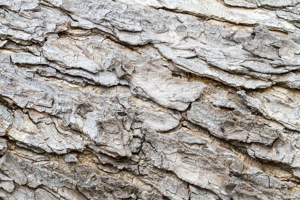 текстуры Кора старые древесины лес Сток-фото © supersaiyan3