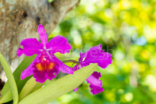орхидеи красивой розовый лист закрыто вверх Сток-фото © supersaiyan3