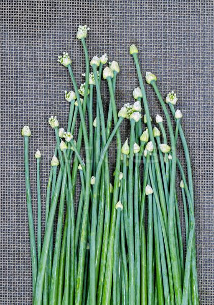 свежие лука цветок стебель черный зеленый лук Сток-фото © supersaiyan3