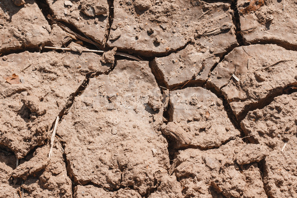 Dry soil closeup Stock photo © Supertrooper