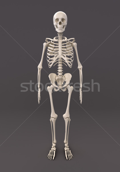 Skeleton of a gray background Stock photo © Supertrooper