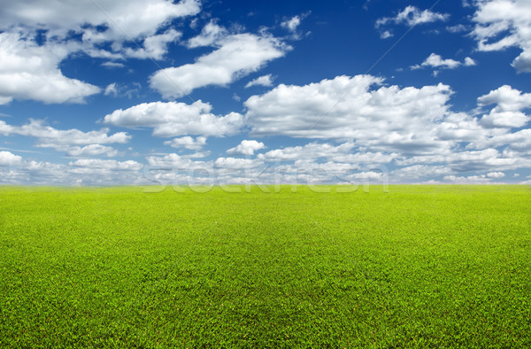 Green field and sky Stock photo © Supertrooper