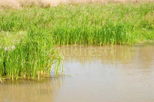 Természetes kicsi tavacska növények part nem Stock fotó © Supertrooper