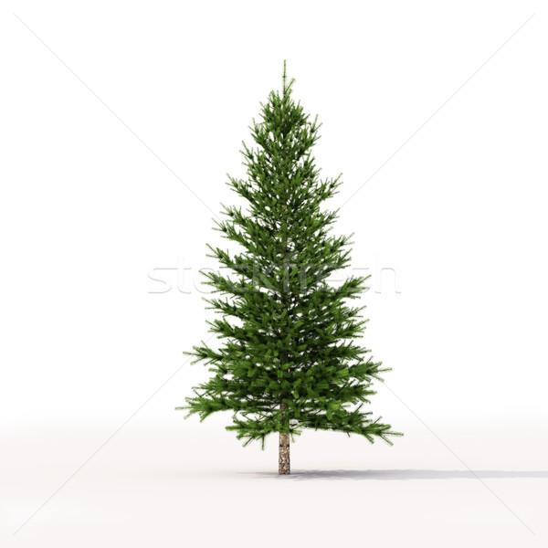 Spruce on white Stock photo © Supertrooper