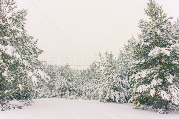 Invierno vacaciones invernal paisaje paisaje bosques Foto stock © Supertrooper