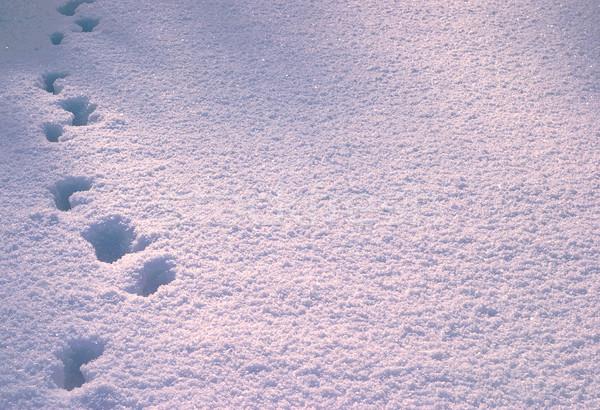 Footprint in deep snow Stock photo © Supertrooper