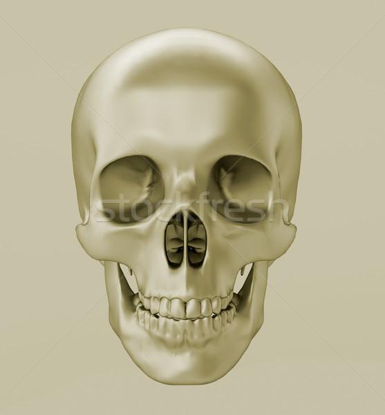 Crâne rendu 3d adulte gris vue Photo stock © Supertrooper
