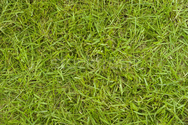 Texture of grass Stock photo © Supertrooper