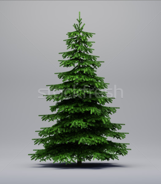 Spruce tree on gray Stock photo © Supertrooper