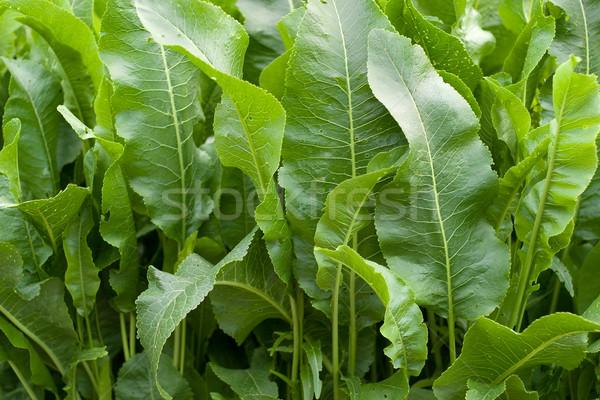 Green vegetation Stock photo © Supertrooper
