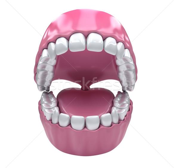 Foto stock: Dentes · adulto · abrir · boca · branco · saudável