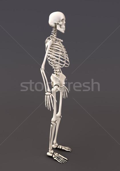 Esqueleto cinza adulto 3d render medicina Foto stock © Supertrooper