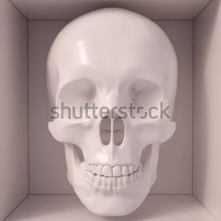 White skull Stock photo © Supertrooper