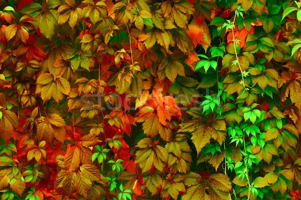 Bright colors Stock photo © Supertrooper