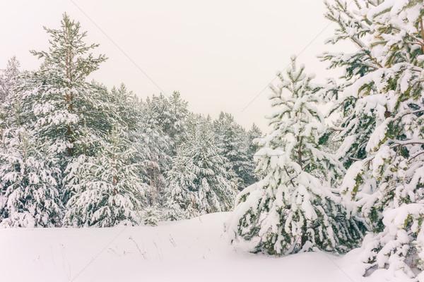 Tél ünnep téli tájkép díszlet erdő Stock fotó © Supertrooper