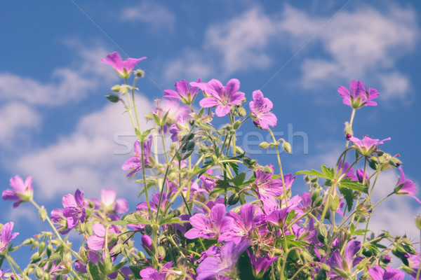 Flowers against blue sky Stock photo © Supertrooper