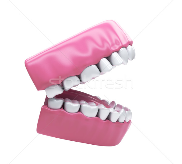 Permanent teeth, adult dentition Stock photo © Supertrooper