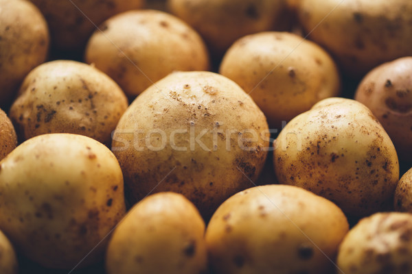 Fresh potato tubers Stock photo © Supertrooper