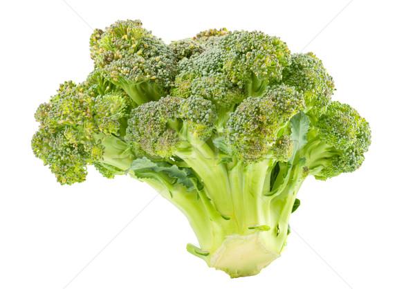 Broccoli isolated Stock photo © Supertrooper