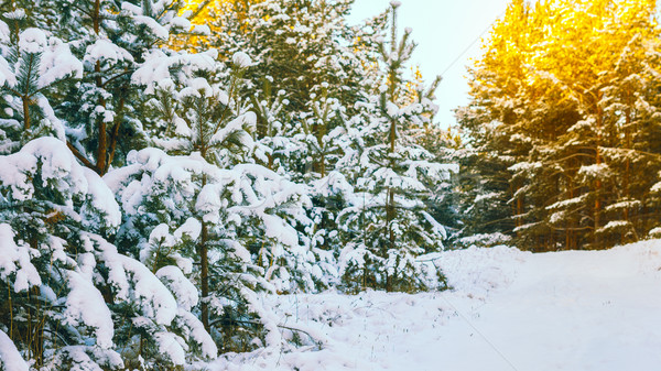 Tél tájkép téli tájkép hó fedett fák Stock fotó © Supertrooper