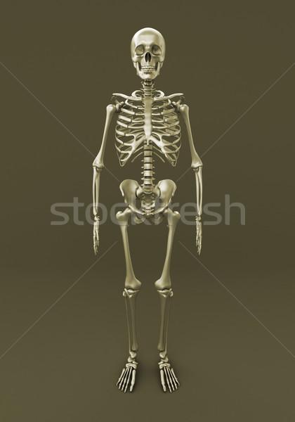 Stockfoto: Skelet · grijs · volwassen · 3d · render · geneeskunde · kleur