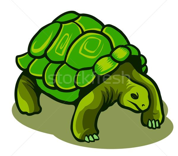 Schildpad kind teken glimlachend geïsoleerd vrolijk Stockfoto © superzizie