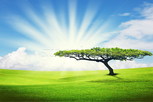 alone tree on grass field Stock photo © Suriyaphoto