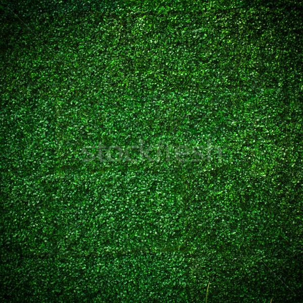 Yaprak doku bahar bahçe arka plan Stok fotoğraf © Suriyaphoto