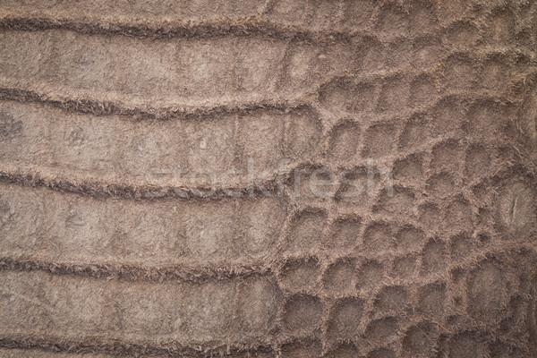 Krokodil deri doku cilt yılan bağbozumu Stok fotoğraf © Suriyaphoto