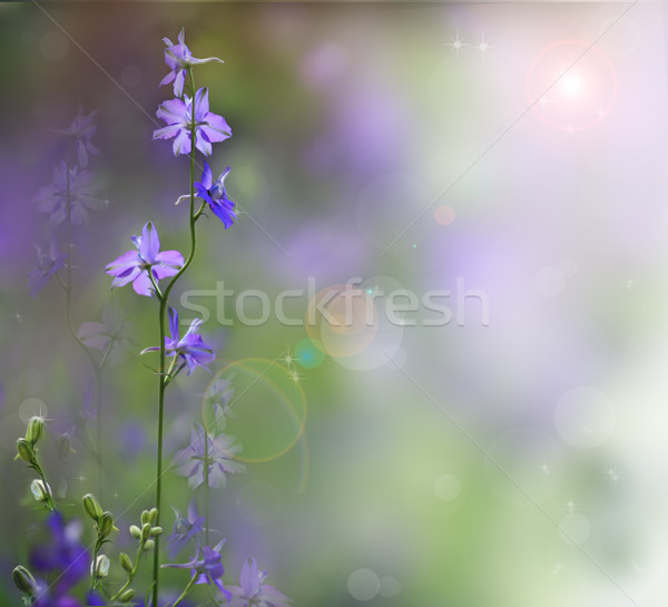 Roze bloemen noordelijk Thailand Pasen voorjaar Stockfoto © Suriyaphoto