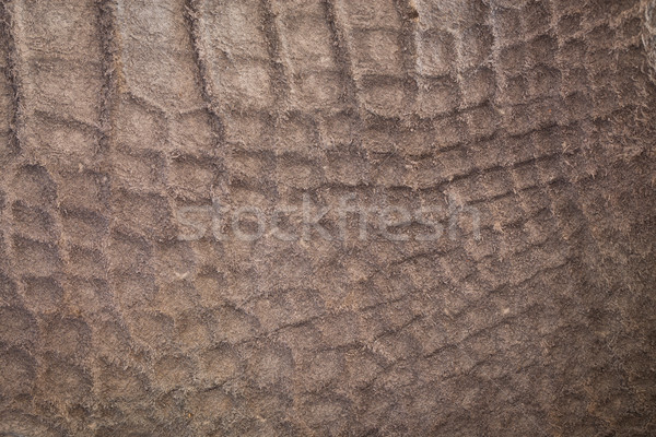 Crocodile leather texture Stock photo © Suriyaphoto
