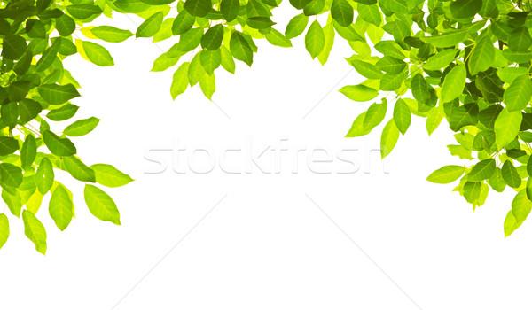 Yeşil beyaz ağaç bahar bahçe Stok fotoğraf © Suriyaphoto