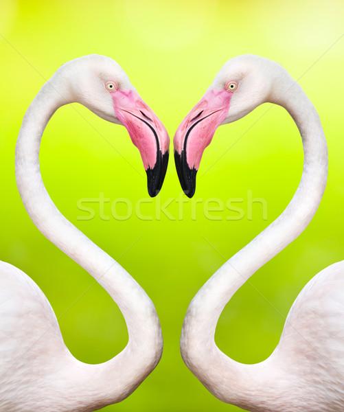 çift kalp şekli su kuş kafa Stok fotoğraf © Suriyaphoto