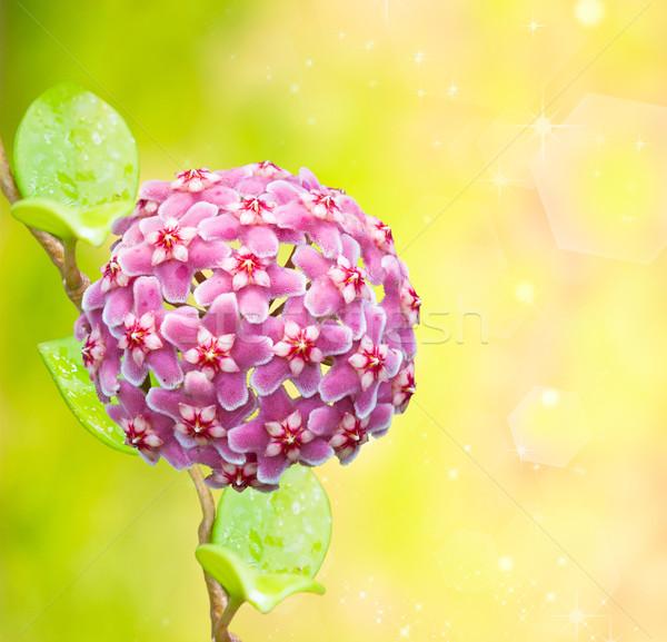 çiçek uzay yeşil renk pembe güzel Stok fotoğraf © Suriyaphoto