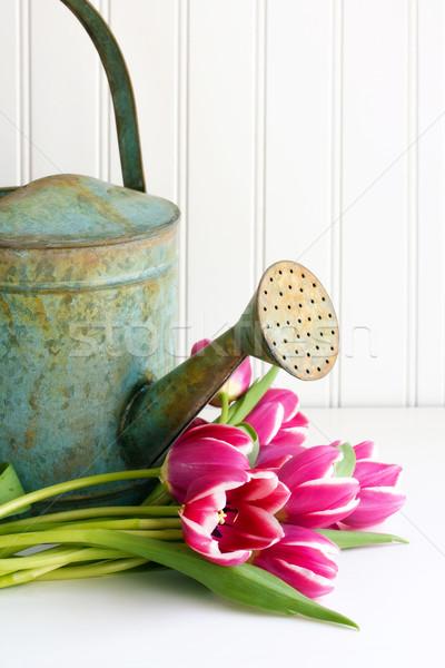 Sulama çiçekler çiçek güzel bahçıvanlık yaprakları Stok fotoğraf © susabell