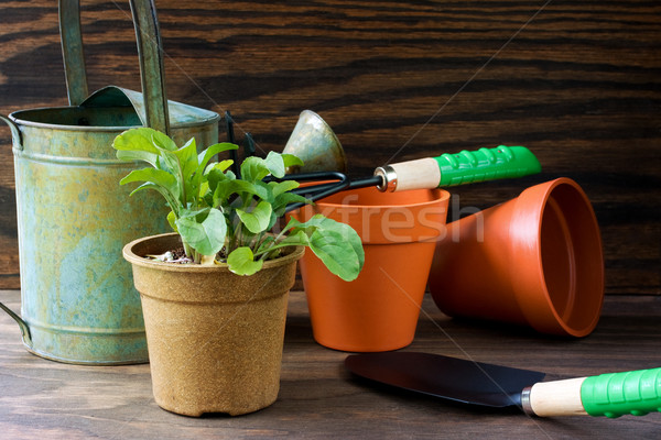 Plant with gardening tools Stock photo © susabell