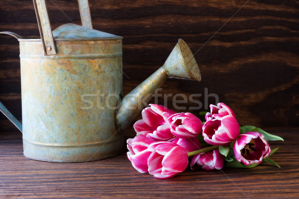 Several tulips and watering can  Stock photo © susabell