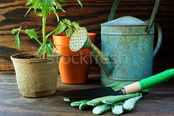 Domates bitki bahçe araçları yaz pot Stok fotoğraf © susabell