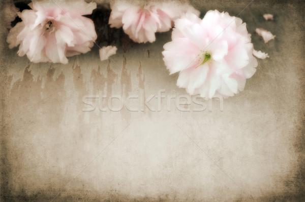Fleurs fond rétro vintage antique Photo stock © susabell