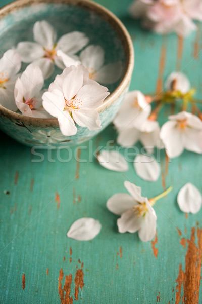 Cherry Blossoms in small bowl Stock photo © susabell