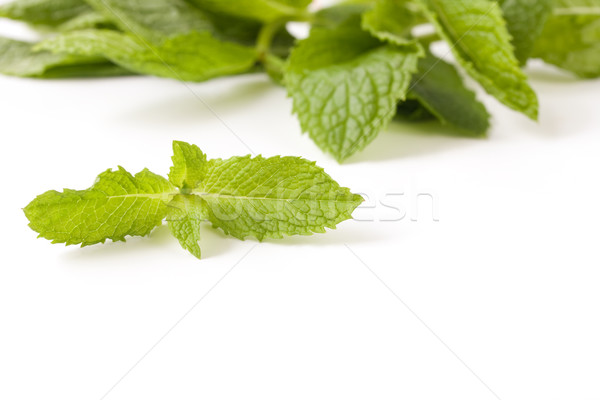 Mint Stock photo © susabell