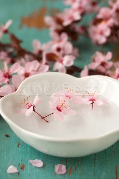 Stock photo: Blossoms in Dish