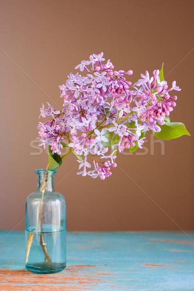 Fleur printemps joli fleur Photo stock © susabell