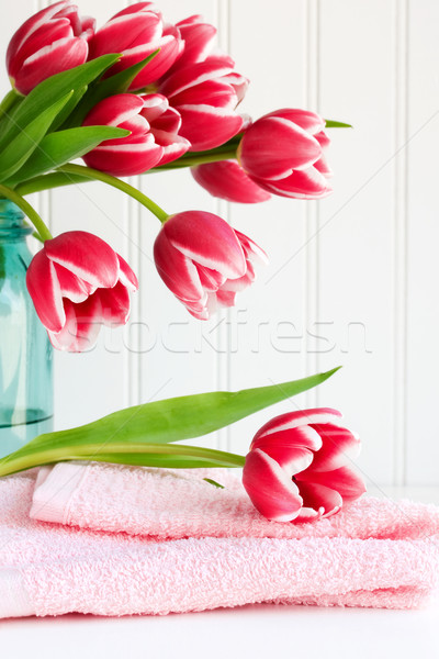 Pink tulips Stock photo © susabell