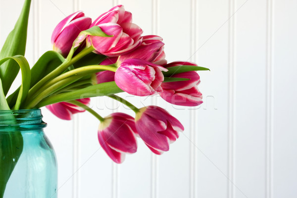 Tulip flowers in blue vase Stock photo © susabell